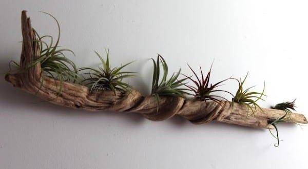 diy-driftwood-wall-garden2
