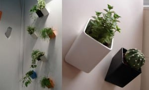 minimalistische Wanddekoration mit Blumentöpfen
