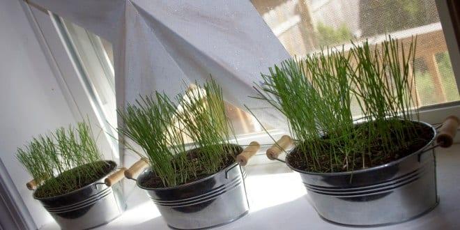 fensterbank dekorieren mit gras