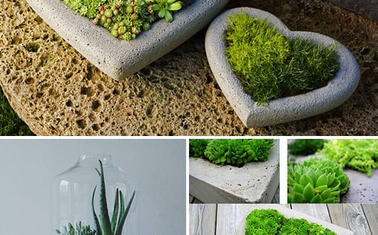 diy terrarium basteln mit beton freshouse. Black Bedroom Furniture Sets. Home Design Ideas