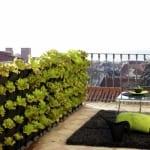 terrasse gestalten mit holzboden und teppich schwarz - kräuter balkon