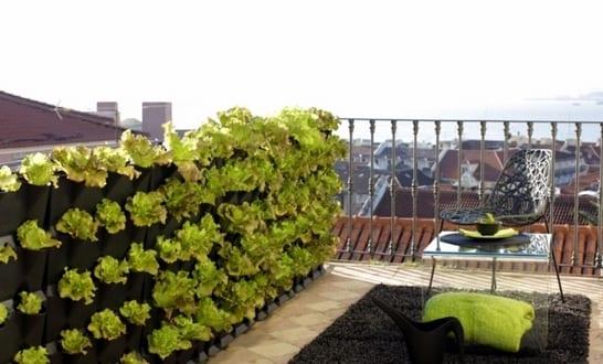Dachterrasse und Balkon Bepflanzen