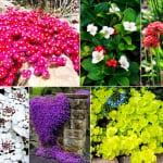 bodendecker mit wunderschönen bunten Farben als schöne gartenideen für gestaltung der gartenlanschaft mit gartenblumen