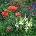 bauerngarten gestalten mit typischen blumen f[r cottage garden