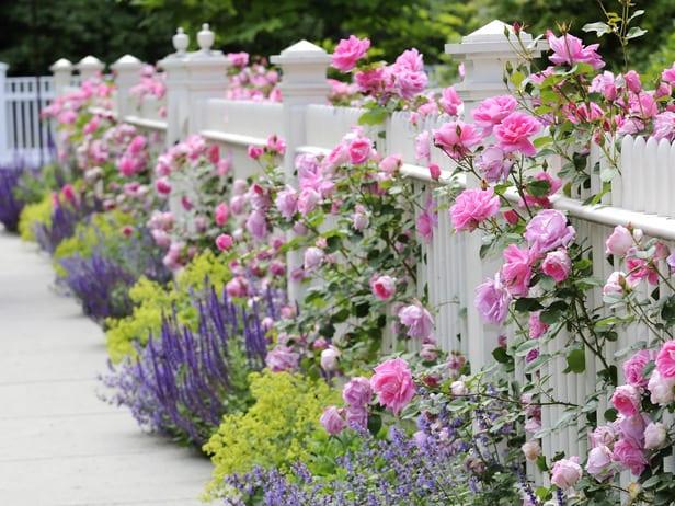 Gemeinsame gartenschau entlang der Gartenzaun mit rosen und lavendel - fresHouse #QP_55