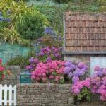 bauerngarten gestalten mit gartenmauer und bauerngartenblumen