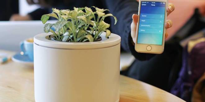 coole Geschenkidee mit dem Blumentopf PLANTY für pflegeleichte Zimmerpflanzen