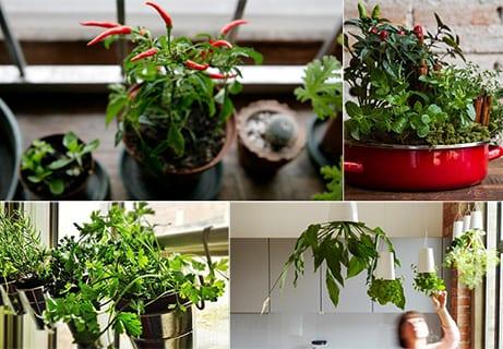Mein schöner Kräutergarten in der Küche