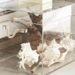 wohnzimmer und schlafzimmer modern einrichten mit acrylglas-truhe