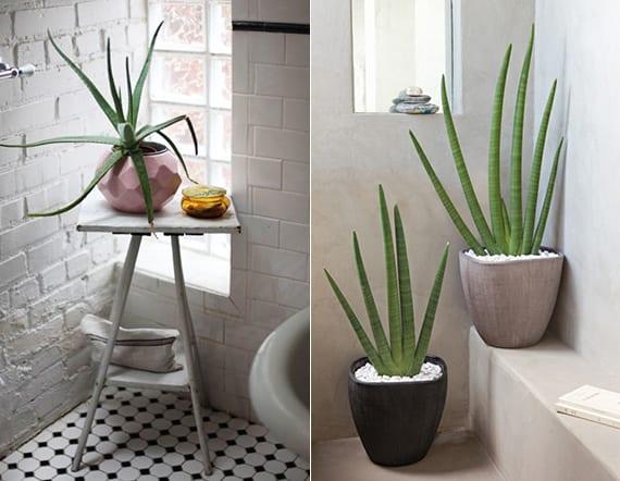 Coole idee fuer badezimmergestaltung mit pflanzen fuers bad bad gestalten mit aloe vera - Giftige zimmerpflanzen fur kinder ...