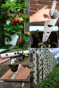 erdbeeren pflanzen in diy containers aus wasserrohren freshouse. Black Bedroom Furniture Sets. Home Design Ideas