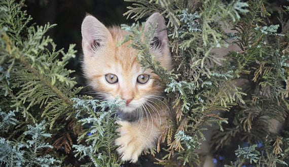Den Garten Tierfreundlich Gestalten Für Katzen Freshouse