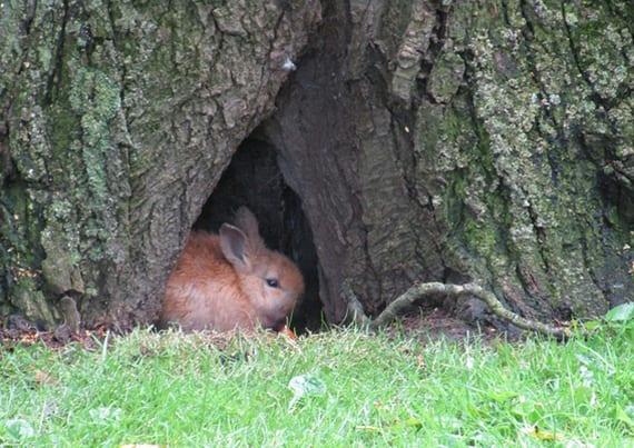 Den Garten Tierfreundlich Gestaltenartgerechter Lebensraum Für Das