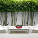 minimalistische gartengestaltung mit betonboden, weißen lounge sesseln und holzcouchtisch,steingarten und bäumen entlag gartenmauer weiß