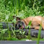 hund im garten_tipps für eine tierfreundliche gartengestaltung