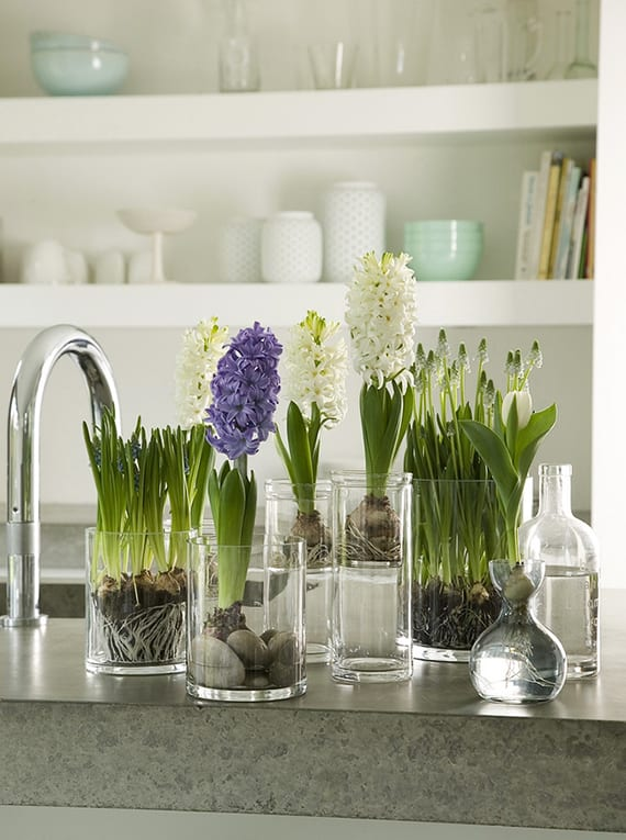 coole küchendeko idee mit Hyazinthen, tulpen und traubenhyazinthen in runden glasvasen mit wasser und steinen
