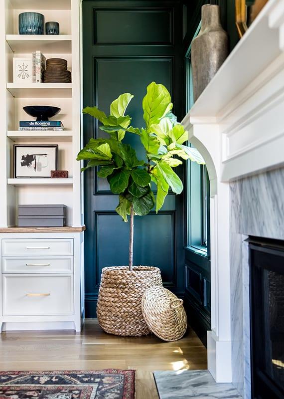 gemütliches wohnzimmer gestalten mit schwarzer holzwandverkleidung, holzregal weiß, kaminmantel weiß und marmor, parkettbodenbelag, Feigebaum im flechtkorb