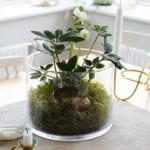 attraktive tischdeko idee mit frühlingsblumen und moos im rundem glasbehälter und modernen kerzenhalter gold