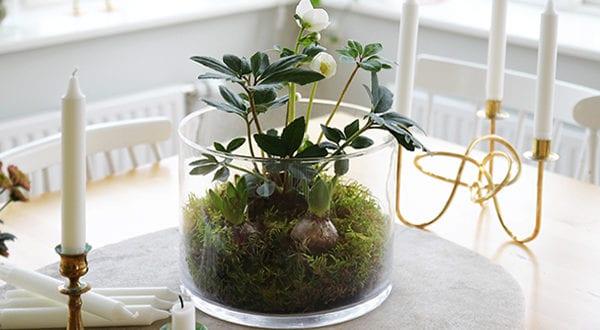 Frühlingsdekor Mit Mini Zwiebelblumen Garten Im Glasgefäß