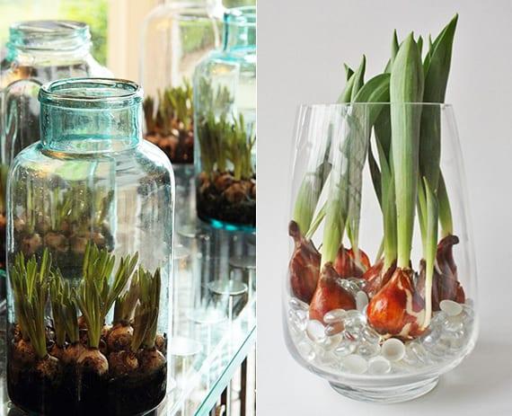 attraktive blumendeko mit tulpenzwiebeln in glasvase mit dekorativen glassteinen