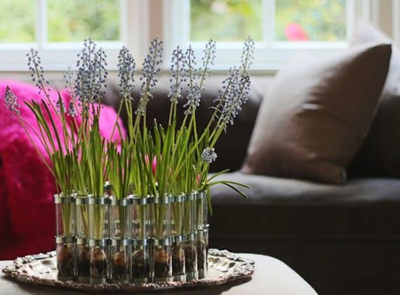 frühlingsdeko wohnzimmer mit zarten zwiebelblumen in einzelnen gläsern