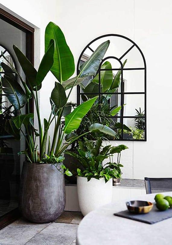 moderne zimmerdeko mit weißem Kübel und großer Paradiesvogelblume in rundem Blumenkübel schwarz neben panoramafenster und wandspiegel in bogenrahmen schwarz