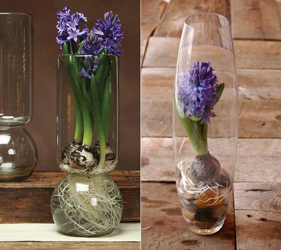 coole frühlingsdeko ideen mit zwiebelblumen in speziellen treibvasen