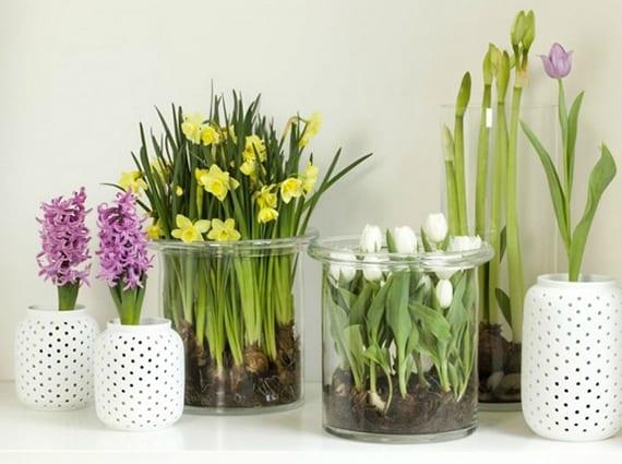 frühjahrdekoration mit gelben narzissen, weißen tulpen und lilafarbigen hyazinthen in großen glasvasen rund und kleinen windlichter weiß