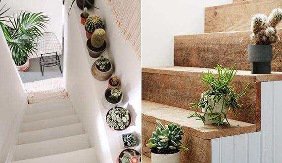 Treppe frisch und kreativ dekorieren mit pflegeleichten pflanzen wie kakteen freshouse - Treppe dekorieren ...