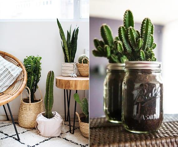 coole dekoideen mit passenden pflanzenbehältern für kakteen und sukkulenten