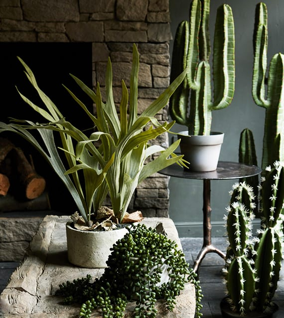 Kakteen pflegeleichte pflanzen mit denen sie jedes for Wohnzimmer mit pflanzen