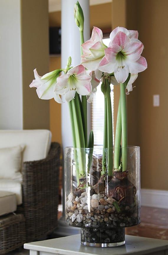 beistelltisch kreativ dekorieren mit Rittersternen in glasvase mit kieselsteinen und wasser