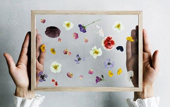 blumendeko basteln mit herbarium aus bunten veilchen