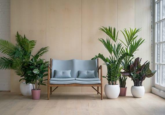 stilvolle Wohnungseinrichtung mit kleinem Garten grüner Pflanzen in weißen Blumentöpfen, hellem Holzbodenbelag, Holzwandverkleidung und moderner Holzbank mit grauer Polster-Sitzfläche