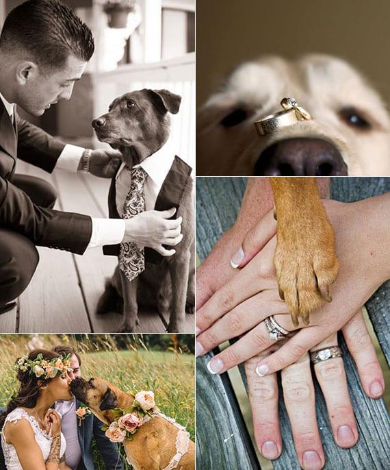 coole fotoideen für brautpaar fotos mit hund