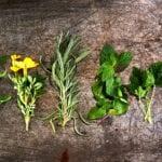 welche pflanzen mag die stechmücke nicht