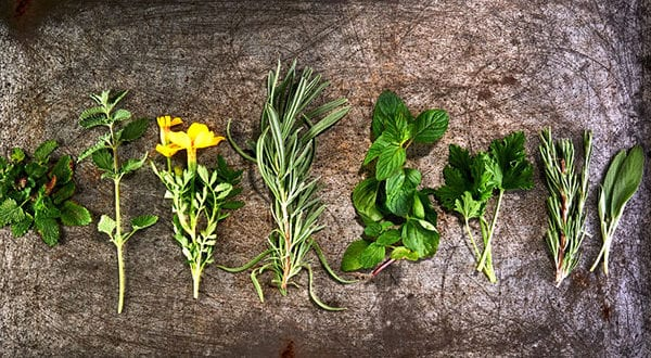9 Pflanzen für Vertreibung der Stechmücken