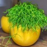pfelegeleichte rhipsalis pflanzen als must-have-zimmerpflanzen für eine frische und schöne begrünung im raum
