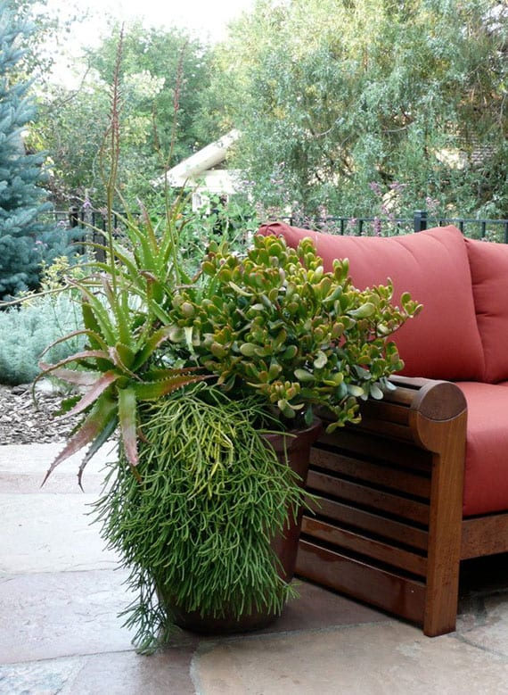 coole terrassen dekoidee mit verschiedenen kakteengewächsen in einem großen blumenkübel als toller akzent zu dem gartensofa