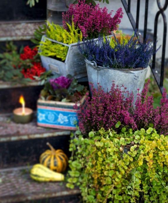 erika und veilchen als passende topf-blumen im september für einen bunten balkon-herbstgarten und bunte außentreppe deko