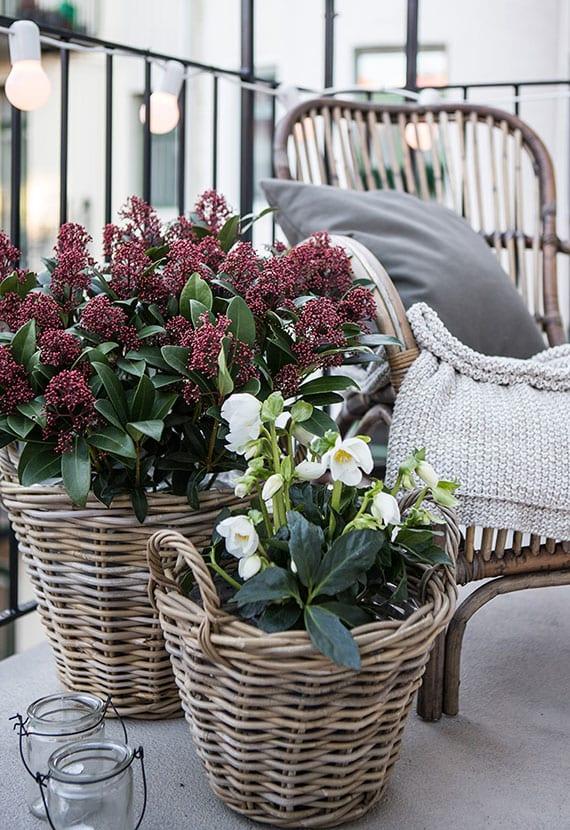 coole balkon ideen für herbstdeko und rustikale gestaltung mit kerzen und winterharten Blumen wie Christrose und Skimmie in weidenkörben