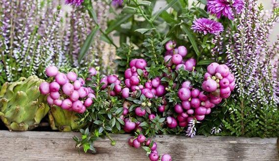 Terrasse Und Balkon Lebendig Gestalten Mit Bluhenden Blumen Im