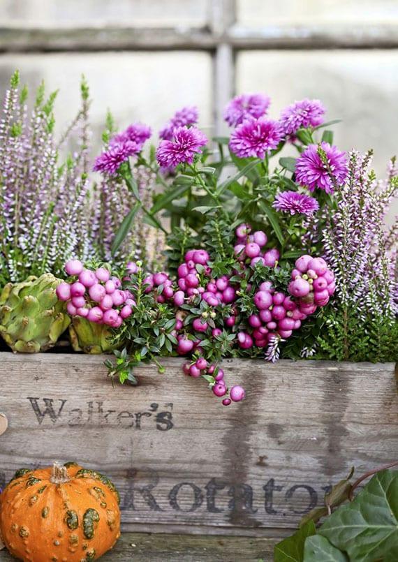 Ebendige Balkondekoration Mit Rosa Blühenden Pflanzen Und Blumen Im  September