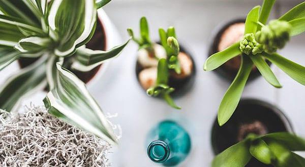 Zimmerpflanzen und Gartenpflanzen vom Blattlaus-Befall schützen