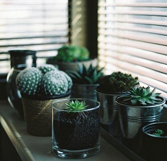 Fensterbank Deko mit Kakteen und Saftpflanzen in runden glas- und metall- blumentöpfen