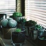 welche Licht eignet sich für die richtige Pflanzenbeleuchtung