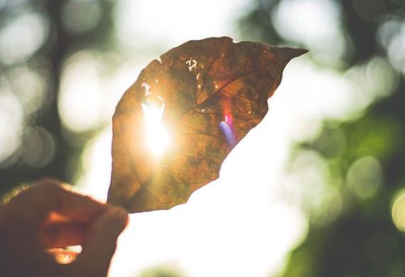 sonnenstrahl durch loch im herbstblatt