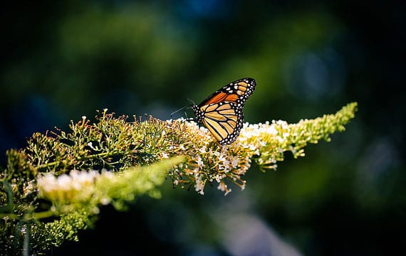 licht als abiotischer umweltfaktor und wessentlicher Faktor bei pflanzen