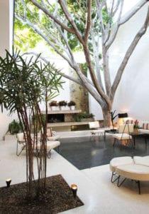 bäume-und-pflanzen-im-innenraum_attraktives-interior-design-fürs-wohnzimmer-mit-akzenten-aus-der-natur