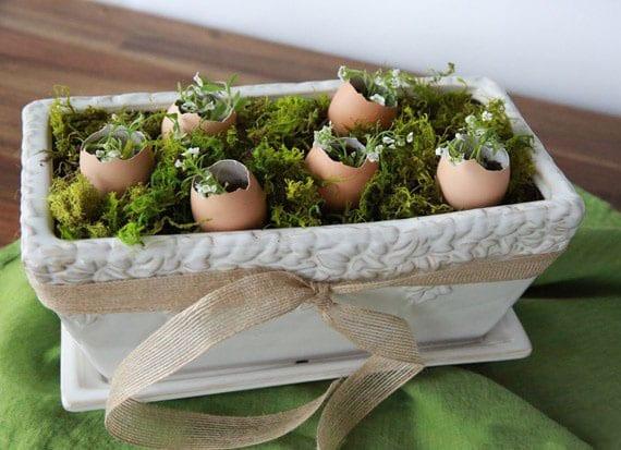 coole bastelidee für frühlingsdeko und diy ostergeschenk mit moos und weißen frühlingsblumen in eierschelen